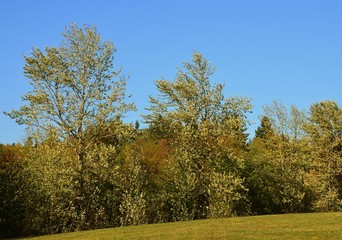 Herbstlandschaft - Wind in den Baumkronen