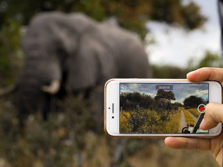 Hacer foto con un móvil a un elefante