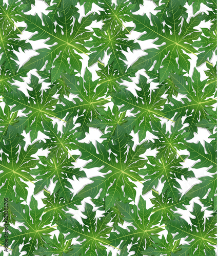 Papaya leaves background for banner, celebration, holiday, packaging