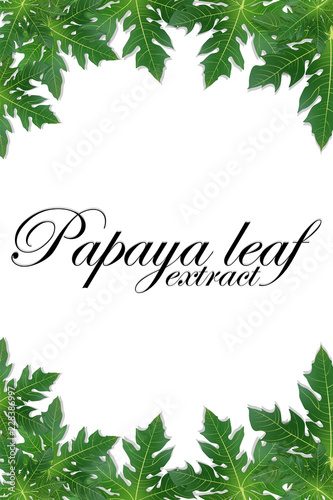 Papaya leaves extract background for banner, celebration, holiday