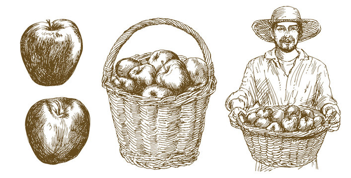 Man holds basket with apples. Basket with apples. Hand drawn set.