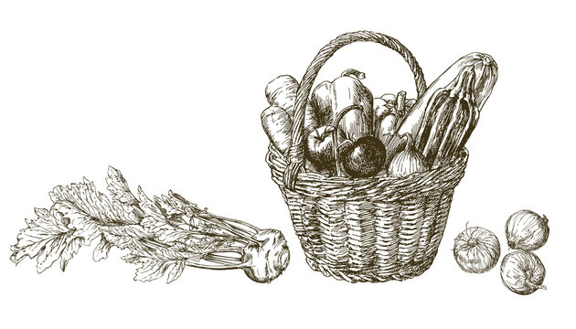 Basket with vegetables. Hand drawn illustration
