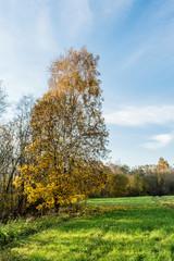 green field, trees with yellow orange foliage, autumn landscape