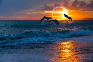 Keuken foto achterwand Dolfijn Couple dolphins jumping on the water with solar eclipse