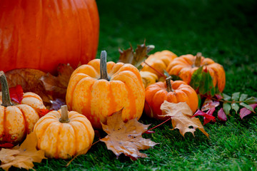 Group of pumpkins with leaves on green lawn
