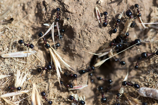 Black ants on the ground