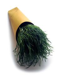 Salsola soda Agretti شور Agretto Barba de Frade di frate گیاه barilla plant Negus ft81031140 Αλμύρα saltwort
