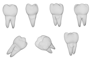 vector set of 3d teeth for dental medicine. isolated on white