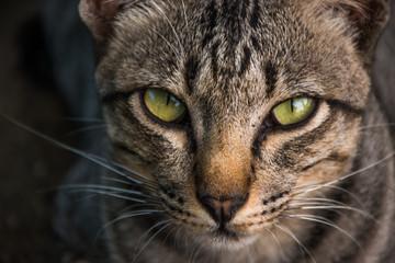 Close-up of cute cat face