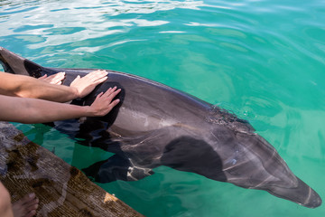 Tourist touch on Dolphin