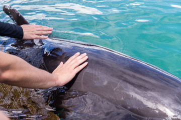 Tourist touch the body of Dolphin