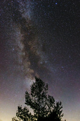 Like a nocturnal burning bush the Milky Way glows around the tree top framed by countless stars