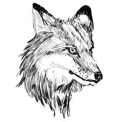fox head hand drawn illustration,art design