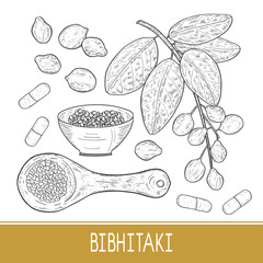 Bibhitaki. Terminalia bellirica. Plant. Leaf, branch, fruit, berry. Triphala. Spoon, plate, tablet. Sketch. Monochrome.