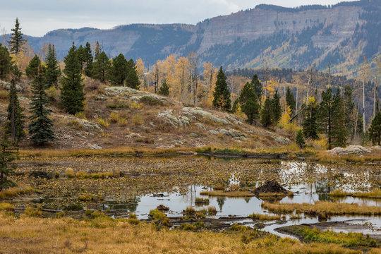 Wetland area Colorado in autumn beaver dam
