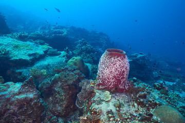 beautiful underwater with the coral reef at Losin diving spot south of Thailand