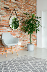 Mirror on the wall of corridor with tall plant in pot, grey stylish chair and brick wall, real photo