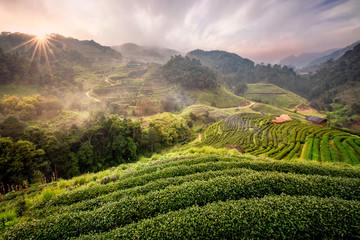 Tea farm Ban No Lae with sea of mist, green tree, blue mountain and sunlight beam in the morning at Doi Ang Khang, Chiangmai, Thailand.