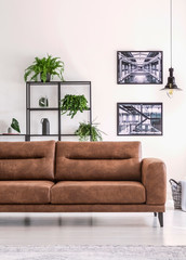 Shelf with green plants behind big comfortable leather sofa in white living room with industrial posters on the wall