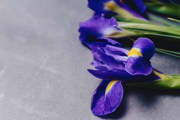 irises on dark background in studio