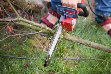 cutting trees, cutting with a saw