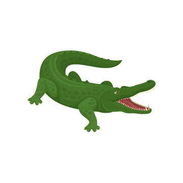Green crocodile with open mouth, predatory amphibian animal vector Illustration on a white background
