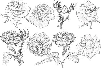 isolated eight roses black outlines collection