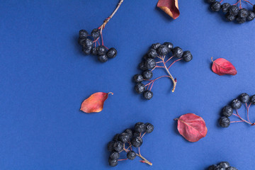 Black berries and autumn leaves on a dark blue background. Top view. Clusters of berries. Pastel embossed paper. Autumn composition of plant elements. Empty space for text on the left.
