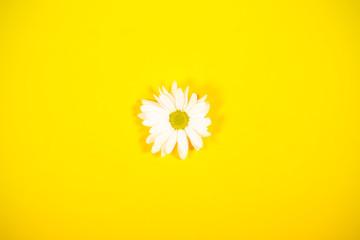 цветок осенний лежит на ярком фоне изолированный