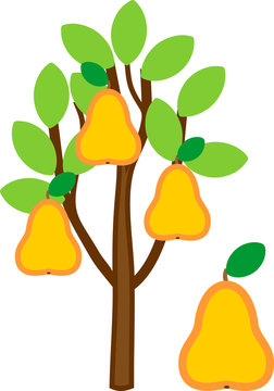 Cartoon pear tree with ripe yellow pears and green leaves isolated on white background