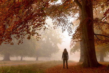 Woman standing alone under a big beech tree. Autumn colors on a misty morning, big trees and path in the forest in Denmark