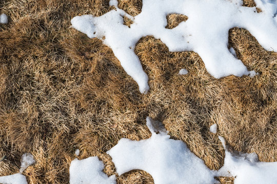 TOP VIEW OF MELTING SNOW ON BROWN DRY GRASS LAWN