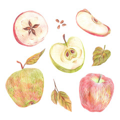 A set of apples painted with colored pencils on a white background. Whole fruits, slices in a cut, seeds and leaves. Food illustration.