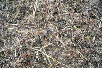 Brown grass background