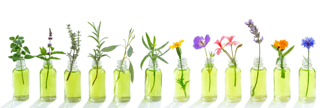 essential oil banner. Essential oil. essential oil with flower, and fresh medicinal herbs, on white background