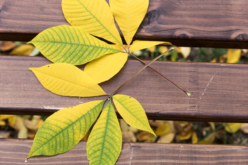 Green yellow leaves lie on the wooden park bench Wall mural