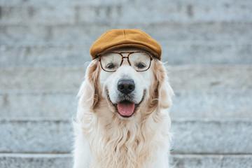 cute golden retriever dog in cap and eyeglasses looking at camera Fototapete