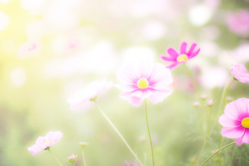 Beautiful pink and colorful pastel flower field,blur flowers  for background