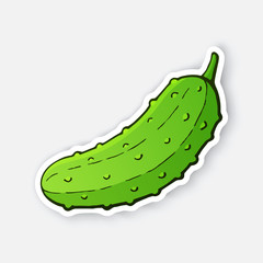 Vector illustration. Green cucumber with a stem. Healthy vegetarian food. Ingredient for salad. Decoration for patches, signboards, showcases, menus. Sticker with contour. Isolated on white background