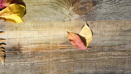 Autumn composition. Frame of autumn dry leaves on a wood background. Place to copy