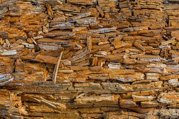 Rotting wood texture. Rotten pine tree trunk with chipped layers of wood, texture. Flaking splitting pine wood background texture.