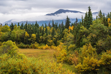 Alaskan landscape in fall color, yellow marsh grass, yellow and green trees and bushes, overcast and cloudy day, mountain in background, Katmai National Park, Alaska, USA