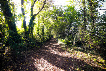 Path through Devon woods