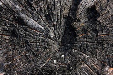Burnt trunk