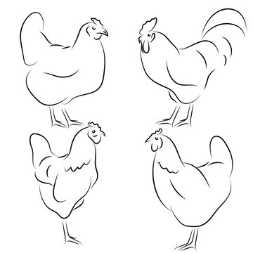Chickens vector, hand draw sketch. Rooster Icons set