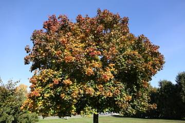 Autumn. Beauty of nature