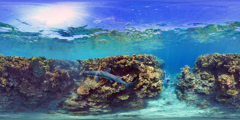 White Tip Shark In Ilot Mato South Reef, New Caledonia