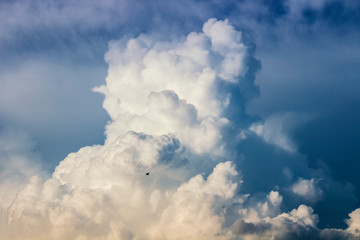 Flying bird in the clouds
