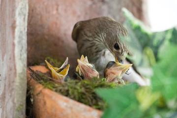 Vogel bei Fütterung der Brut Wall mural