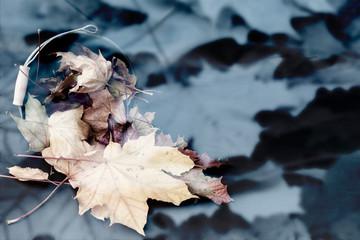 schöner abstrakter Hintergrund aus Blättern